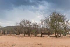 Малая африканская деревня с imbondeiros anisette Стоковая Фотография