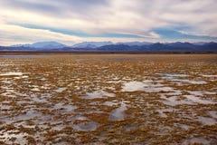 Малая вода в национальном парке Nabq Стоковое Фото