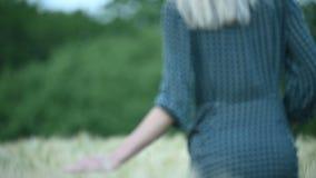 Малая глубина конца-вверх поля Рука маленькой девочки касается зеленым колоскам на пшеничном поле в вечере Крутой акции видеоматериалы
