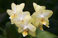 Малая группа орхидеи Стоковые Изображения