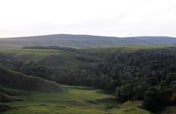 Малая долина леса в sabana gran, Венесуэле Стоковые Фото