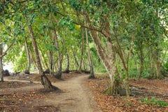 Малая дорога в тропическом лесе Стоковое Изображение RF