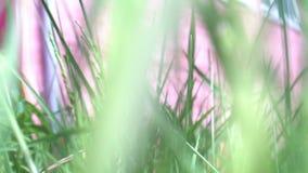 Малая животная тварь бежать через траву носясь через след - точку зрения POV сток-видео