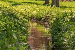 Малая заводь пропускает в зеленой траве в лесе Стоковая Фотография RF