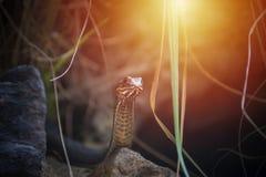 Малая змейка в живой природе Стоковое фото RF