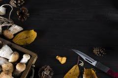 Малая корзина с грибами осени стоковое изображение