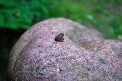 Малая лягушка Стоковое Изображение