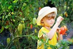Малая, милая маленькая девочка в шляпе жмет зрелый сбор ri Стоковое Фото