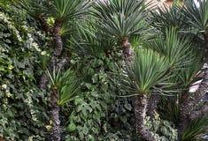Малая пальма стоковая фотография