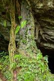 Малая пещера в тропическом лесе Стоковые Фотографии RF