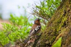 Малая птица в лесе Стоковое Изображение