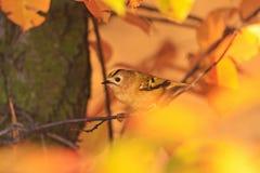 Малая птица среди цветов осени одичалого леса Стоковое Изображение
