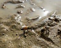 Малая пчела делает большую работу стоковое фото rf