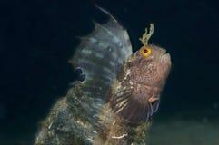 Малая рыба приходит вне на стекло Стоковые Изображения RF