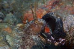 Малая рыба приходит вне на утес Стоковое фото RF