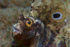 Малая рыба приходит вне на утес Стоковая Фотография
