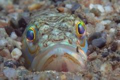 Малая рыба приходит вне на утес Стоковое Изображение