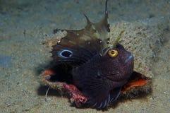 Малая рыба приходит вне на утес Стоковые Изображения RF