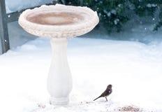 Малая серая птица с семенем в своем клюве, стоя в снеге около b Стоковые Фото