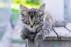 Малая серая striped киска кладет на стул и взгляды тщательно a стоковое фото