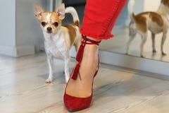 Малая собака стоя около женской ноги в красных ботинках Женская нога в красных брюках стоковое фото