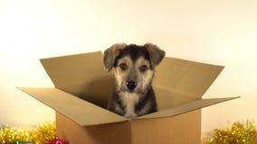 Малая собака щенка сидит в пересылая коробке с украшениями рождества и Нового Года Стоковые Фотографии RF