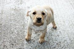 Малая собака, щенок, милый, добросердечный Стоковое Изображение
