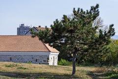 Малая сосна и старый дом стоковые изображения