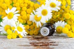 Малая стеклянная бутылка с эфирным маслом на старой деревянной предпосылке Цветки стоцвета и пижмы, конец вверх Стоковое фото RF