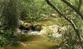 Малая сцена реки с водопадом в южной Аризоне Стоковые Изображения
