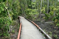 Малая тропа моста цемента в красивом лесе Стоковые Фотографии RF