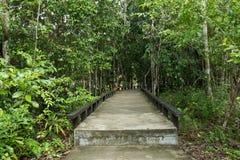 Малая тропа моста цемента в красивом лесе Стоковые Изображения RF