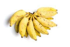Малая тропическая группа банана на белизне Стоковое фото RF