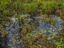 Малая трясина с осокой на glade Стоковое Фото