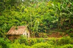 Малая хата в джунглях Стоковые Изображения RF