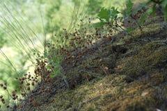 Малая экосистема в королевстве леса Стоковые Фотографии RF