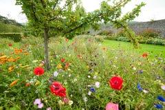 Малая яблоня вполне яблок растя в саде окружила b стоковые изображения