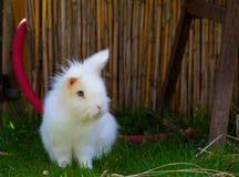 маленькая белизна кролика Стоковое Изображение