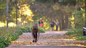 Маленькая девочка в комбинезоне с наушниками бежать в осеннем парке, стопами для того чтобы связать ее хихикает и продолжает jogg видеоматериал