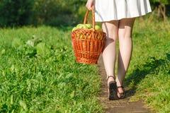 Маленькая девочка держа корзину яблок в саде Стоковое Изображение