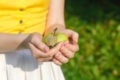 Маленькая девочка держа корзину яблок в саде Стоковое Изображение RF