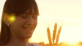 Маленькая девочка держит пшеницу в ее руках и улыбках в лучах и слепимости заходящего солнца сток-видео