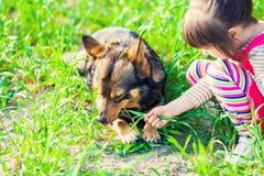 Маленькая девочка играя с собакой стоковое изображение