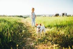 Маленькая девочка идет с сметанообразным чихуахуа в поле стоковое фото rf