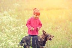 Маленькая девочка идя с собакой на поле стоковые изображения