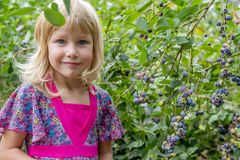 Маленькая девочка комплектуя голубики 01 стоковое изображение