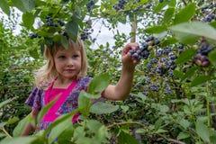 Маленькая девочка комплектуя голубики 01 стоковые изображения
