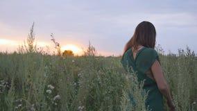Маленькая девочка на заходе солнца в поле акции видеоматериалы