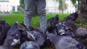 Маленькая девочка подает голуби в парке осени акции видеоматериалы