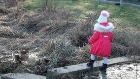 Маленькая девочка подает хлеб диких уток акции видеоматериалы